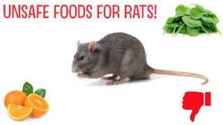 Download Unsafe Foods For Rats! Video