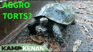 Download Are Mountain Tortoises Aggressive? Video