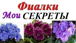 Download ФИАЛКА: советы НАЧИНАЮЩИМ! Мои СЕКРЕТЫ выращивания! Video
