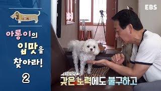 Download 세상에 나쁜 개는 없다 - 미식견 아롱이의 입맛을 찾아라 #002 Video
