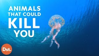 Download Animals That Will Kill You While You're on Vacation Video