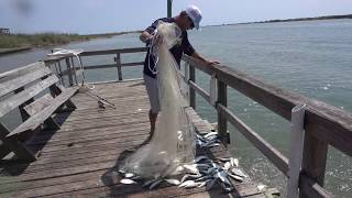 Download Most Fish I've Ever Caught in a Cast Net!! Video