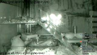 Download [모찌Live/햄스터] 실시간 햄스터 관찰 방송 Hamster Live #16-12-20 Video