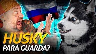 Download HUSKY É UM BOM CÃO DE GUARDA | Richard Rasmussen Video