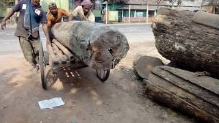 Download Heavy, Old and Solid High Quality of Wood Cutting, Lifting to the Machine at Saw Mill of Aisa-BD Video