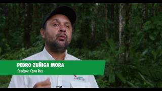 Download La rehabilitación de los bosques de Costa Rica Video