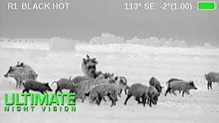 Download Wild Boar Hunting in Texas | 40 Hogs Down with the Armasight Zeus Thermal Scope Video