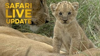 Download Welcome to the world little lion cub! Video