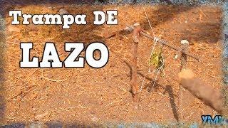 Download TRAMPA DE LAZO PARA CONEJOS DE PASO   TUTORIAL  YMX SUPERVIVENCIA Video