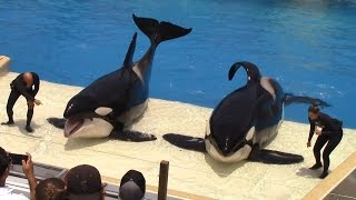 Download One Ocean (Full Show) at SeaWorld San Diego on 6-24-16 Video