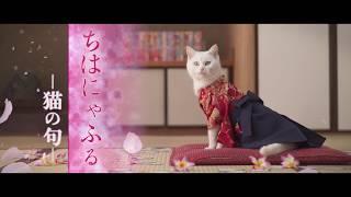 Download 『ちはにゃふる -猫の句-』 Video