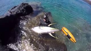 Download Spearfishing Hawaii Blue Water Hunta! Video