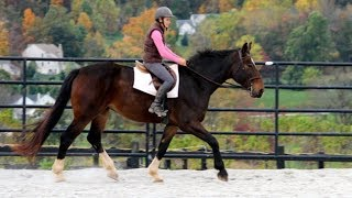 Download One Exercise to Improve Your Sitting Trot Video