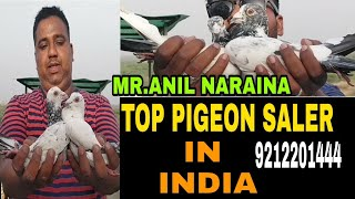 Download ONE OF THE TOP PIGEON SALER IN INDIA MR.ANIL NARAINA . MADRASI PIGEON & PAIRS . DELHE Video