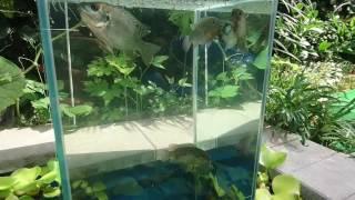 Download DIY Floating Aquarium pond Video