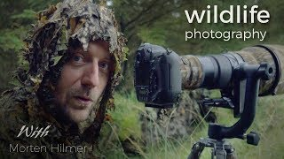 Download Red Deer - Wildlife Photography | behind the scenes vlog with wildlife photographer Morten Hilmer Video