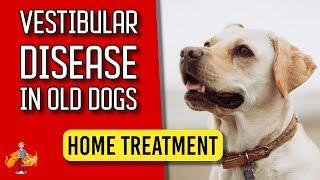 Download 5 Essential Home Treatment Tips for Old Dog Vestibular Disease - Dog Health Vet Advice Video
