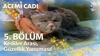 Download Kediler Arası, Güzellik Yarışması! - Acemi Cadı 5. Bölüm Video