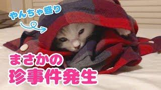 Download 【珍事件発生】やんちゃ盛りの子猫の日常 Video