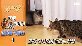 Download 고양이를 부탁해 - 프로파이터 호야를 막아라 #001 Video