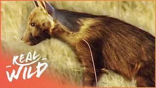 Download Ghosts Of The Great Salt Lake [Brown Hyena Documentary] | Wild Things Video