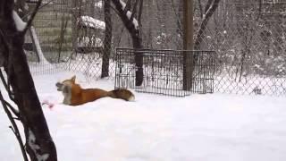 Download Fox Snow Go Video