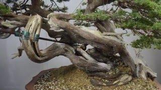 Download Time-lapse at Bonsai Sense 2016 Video