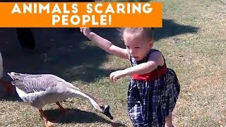 Download Funniest Animals Scaring People Reactions of 2017 Weekly Compilation | Funny Pet Videos Video