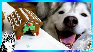 Download DIY GINGERBREAD DOG HOUSE for Christmas 🎄 | DIY Dog Treats | Snow Dogs Snacks 62 Video