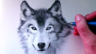 Download How to Draw a Wolf Video