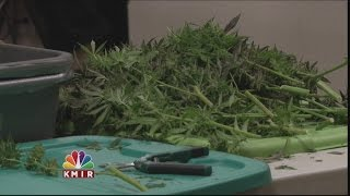 Download Recreational Marijuana: New Rules to Know Video