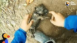 Download Man Gives Drowning Puppy CPR | The Dodo Video