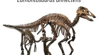 Download Dinosaur Ecology I Video