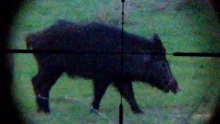 Download . 22 LR Savage Mark II FV-SR Hog with Tracer Video