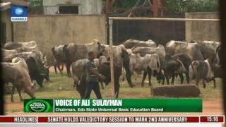 Download News Across Nigeria: Teachers, Residents Lament Cattle Invasion In Edo School Video