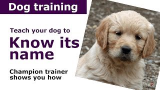 Download How to train your dog to know its name | Expert puppy training advice Video