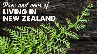 Download Pros & Cons of Living in New Zealand | A Thousand Words Video