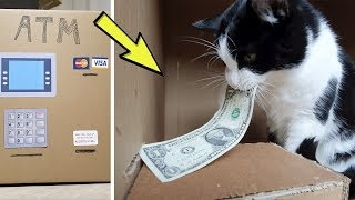 Download ATM. How does it work? View from inside. Meow! Video