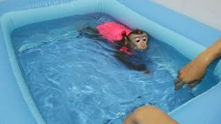Download Monkey Baby Nui | Nui was bathed in the new pool Video