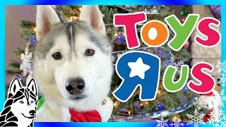 Download DOGS LOVE TOYS | Day 4 of 12 Days of Giveaways 2016 🎄 with the Huskies Video