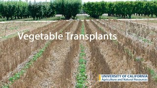 Download Vegetable Transplants Video