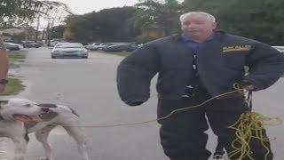 Download Bulletproof Dog Whisperer Video