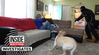 Download Dogs Tested to See Whether They'd Defend Owner During Home Invasion Video