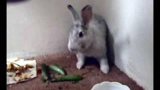 Download أرنب معصب Video