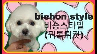 Download 비숑프리제,비숑미용스타일,비숑귀툭튀컷,How to groom a Bichon frise. Bichon style Video