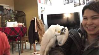 Download watch this and see my cockatoo so excited after seeing his gift😱❤️❤️❤️ Video