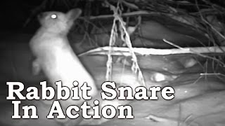 Download Snowshoe Hare Rabbit Snaring on Trail Camera | Part I Video