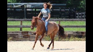 Download Kentucky Extreme Mustang Makeover 2018 - Eevee Video