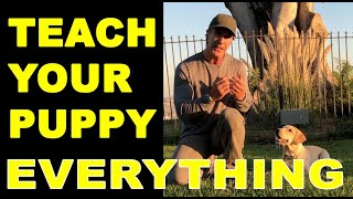 Download How to Train Your PUPPY to do Everything - Puppy Dog Training Video - Robert Cabral Video