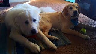 Download Super Cooper Sunday #18 - Coop has a BIG New Friend! Video
